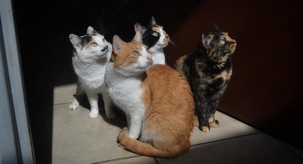 Des chats dans une pension