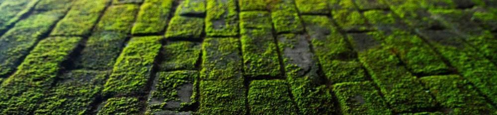 de la mousse végétale dans un jardin