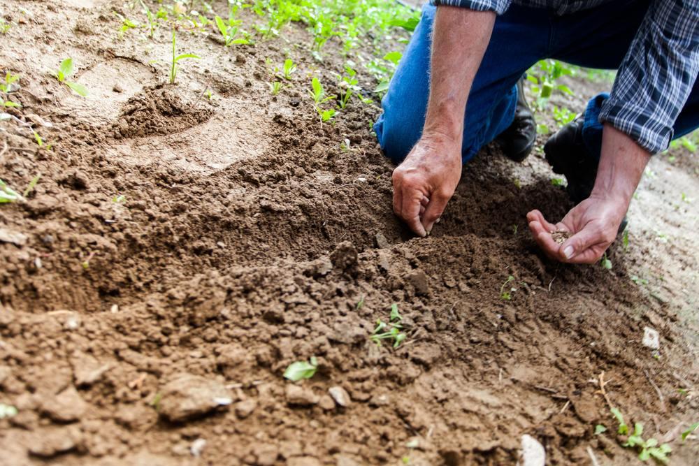un jardinier à domicile en train de planter des graines