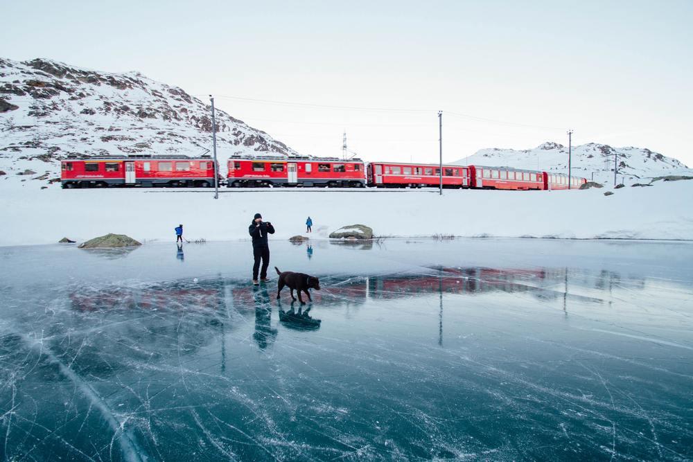 Un chien fait une pause lors d'un voyage en train