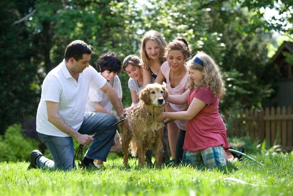Un chien dans une famille d'accueil