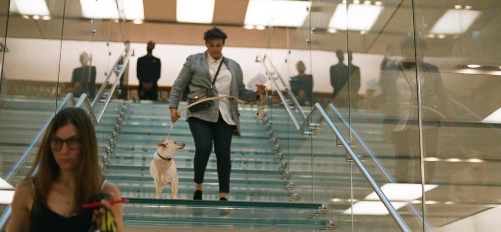 Un chien à l'aéroport