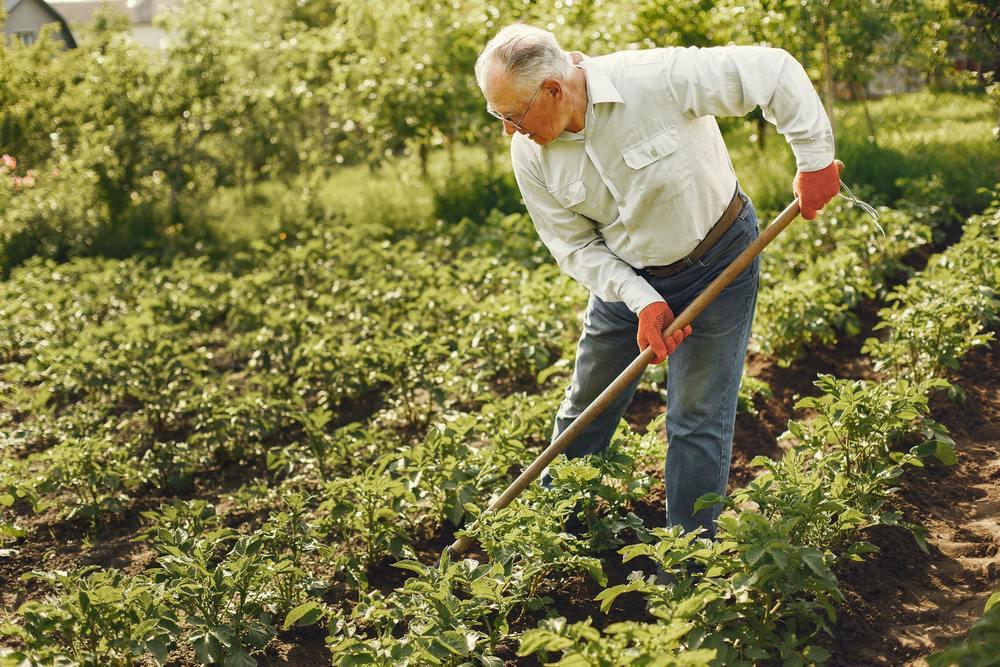 un jardinier en train de retourner la terre avec une bêche