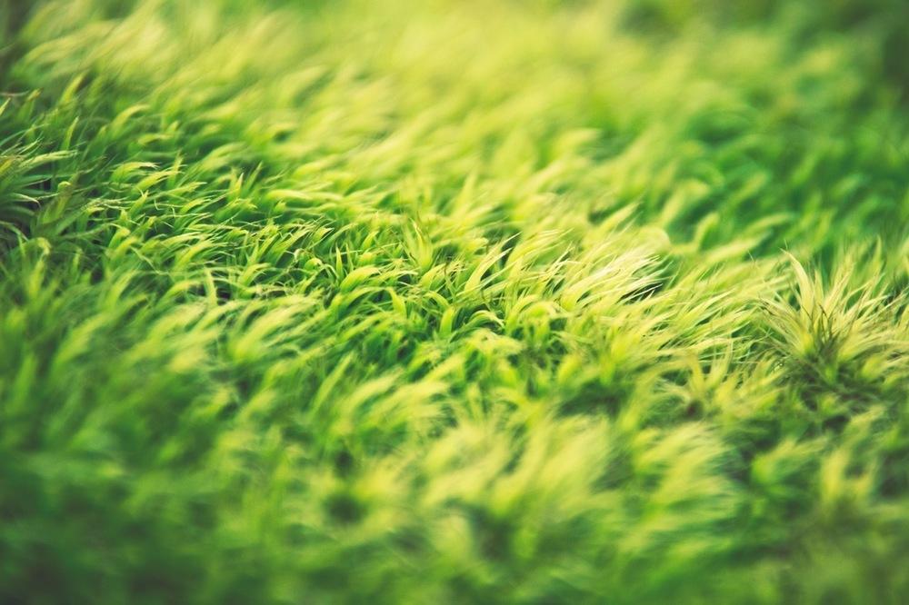 scarifier-pelouse