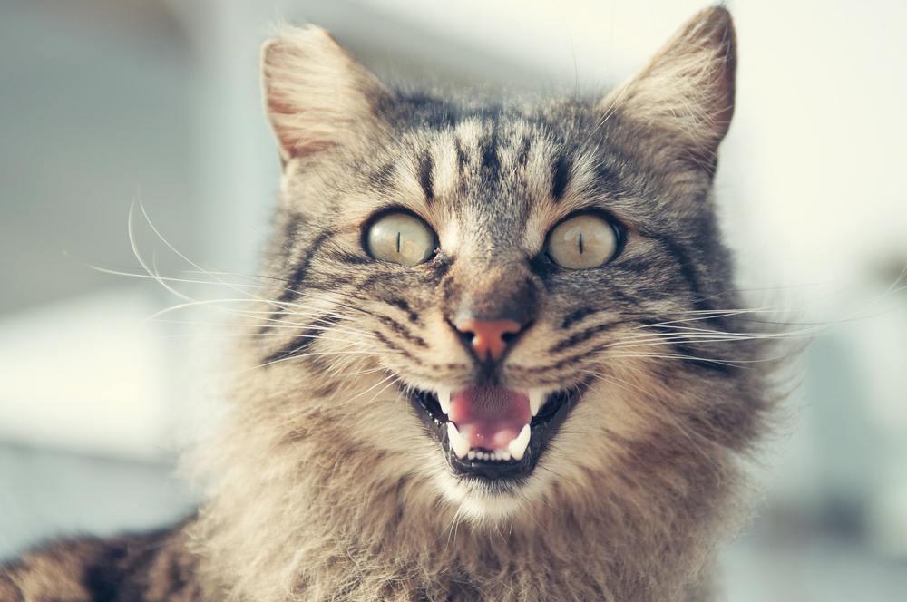 Un chat qui vient d'uriner