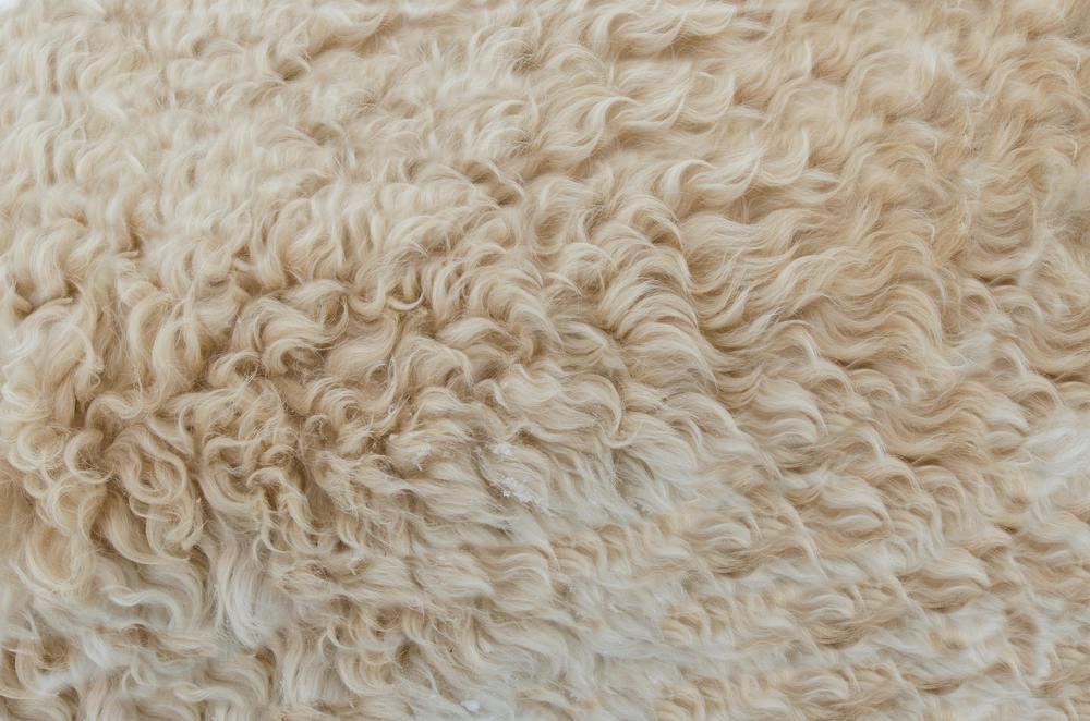 Un tapis à poils long bien entretenu