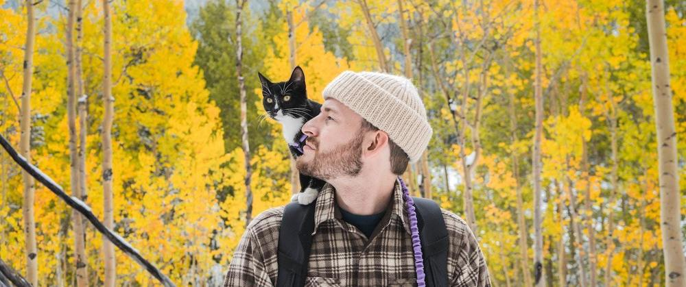 Un chat voyage avec un homme
