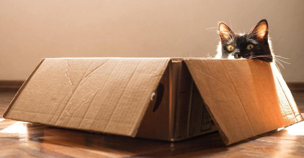 Un chat se cache dans une boite