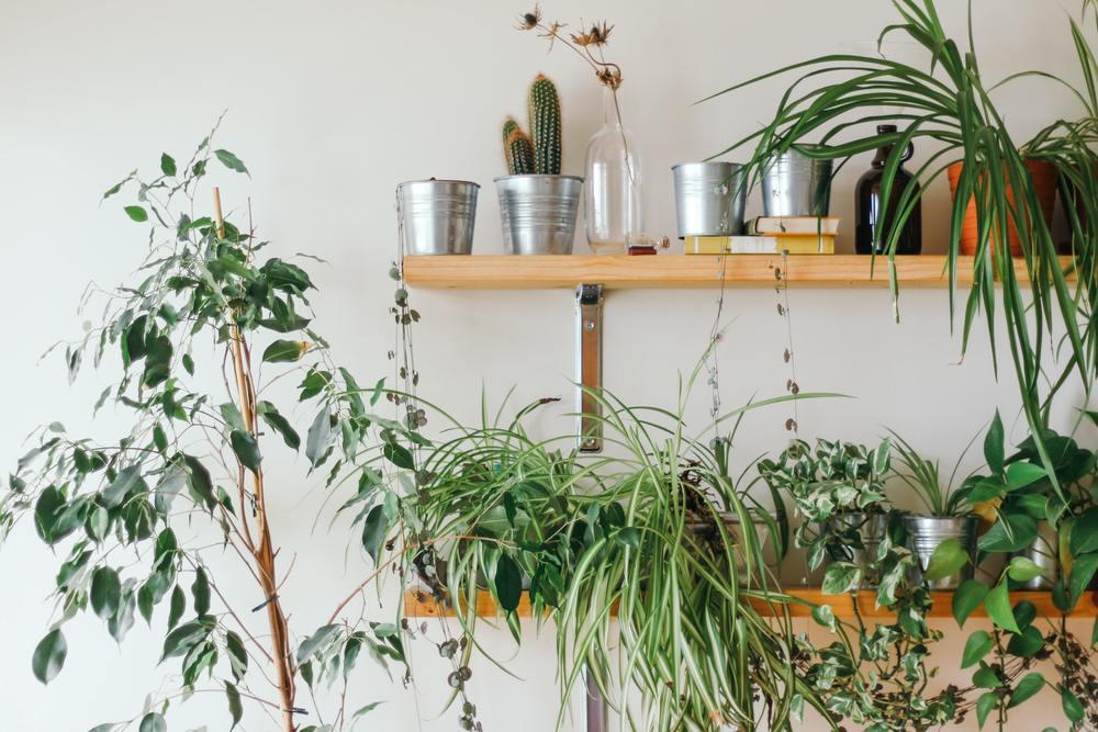 Un arrosage pour des plantes interieus