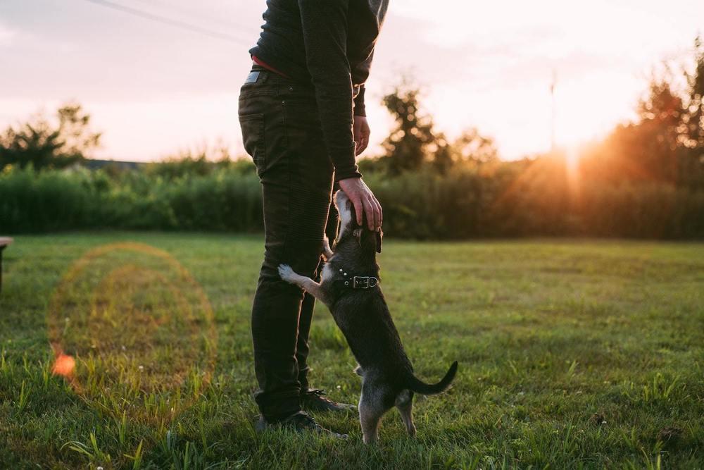 Un homme promène son chien
