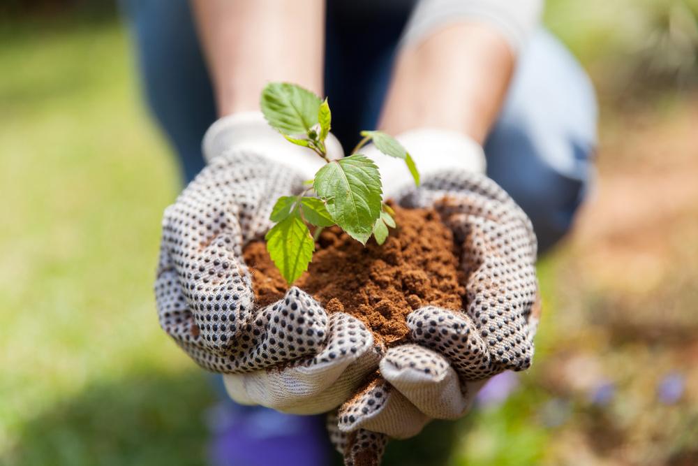 Faire son jardin grâce à jardin-secrets.com