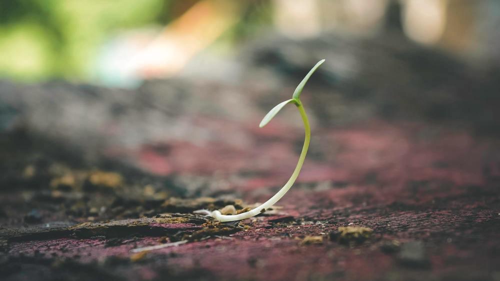 Une graine semée en Octobre qui germe