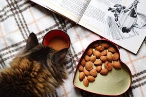 Comment nourrir mon chat pendant mes vacances ?