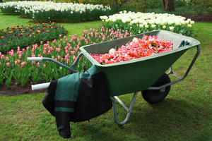 Que doit-on faire au jardin en septembre ?